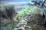 Untersuchungen von Maßnahmen zur Optimierung der Hasenstrecken mehr dazu...