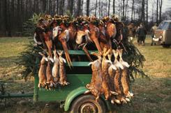 In fast allen Revieren sind die Hasenstrecken stark zurück gegangen.